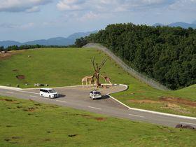 九州自然動物公園「アフリカンサファリ」で野生のスリルと感動を!|大分県|トラベルjp<たびねす>