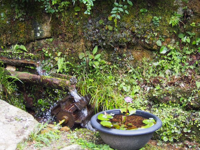 庭のテーマ「祈り」