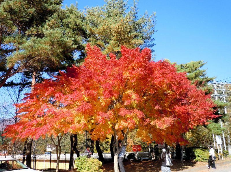 エメラルド色の滝壺、錦秋の山々!登山で楽しむ山梨「西沢渓谷」