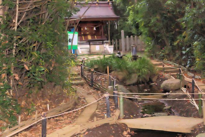 丹沢の伏流水が湧き出、蛍が遊ぶ千年の杜に佇む龍蛇神の社