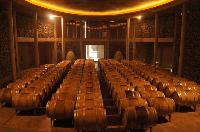 マテティック(Matetic vineyards)のこだわり