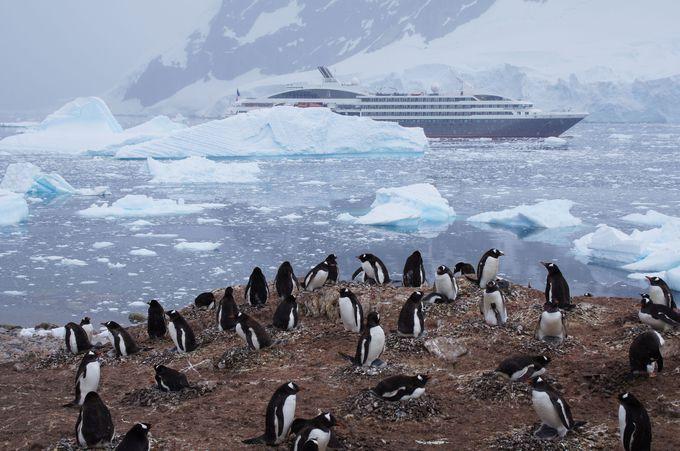 ペンギンの赤ちゃん誕生と換羽を自然界で見てみよう!