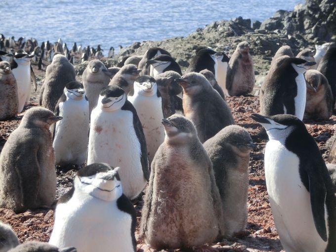 手つかずの自然が残る南極