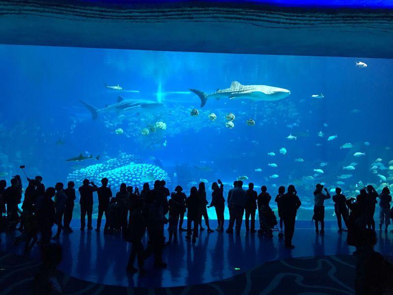5つのギネスに登録!中国珠海にある世界一の水族館の魅力