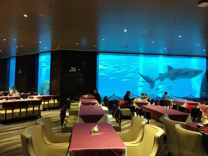 """常に興奮してしまうレストラン """"Ocean Beauty Restaurant"""""""