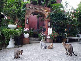 12匹の看板猫がいるホテル!?「アヴェール」で南房総グルメに舌鼓|千葉県|トラベルjp<たびねす>