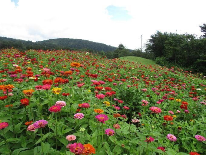 富士 花めぐりの里は季節限定のお楽しみ!