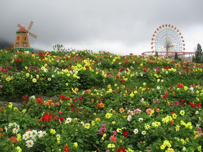 天空の花園は長〜く楽しめます!