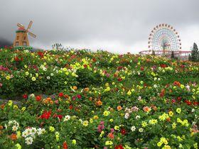 百花繚乱!富士山に天空の花園が出現!ぐりんぱ&富士 花めぐりの里|静岡県|トラベルjp<たびねす>