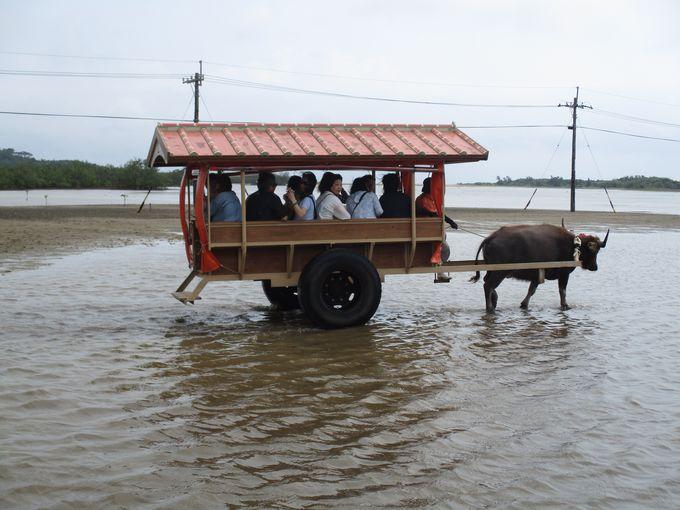 海を渡る水牛にひかれて、由布島まいり!