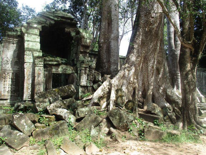 密林に眠る神秘の遺跡