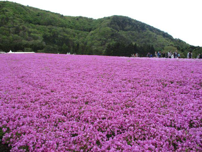 米国CNNが選んだ「日本の最も美しい場所31選」!