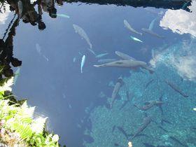 インスタ映えを狙ってみる?山梨・忍野八海の奇跡のブルー!|山梨県|トラベルjp<たびねす>