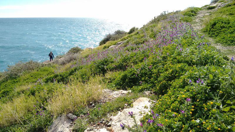 海とお城が魅力!サロブレーニャはスペイン・アンダルシアの白い村