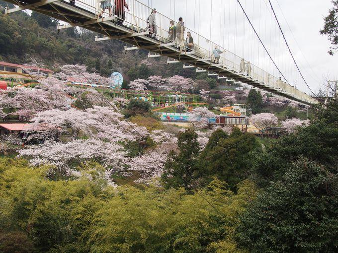 春は桜、夏は湧水のプール、さらにBBQも。欲張りに楽しめちゃう!