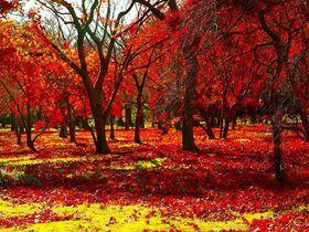 350本の紅葉が彩る!岡山「後楽園」秋のイベントと茶屋屋敷でまったり|岡山県|トラベルjp<たびねす>