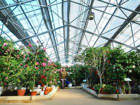 圧巻!600種の椿、世界の椿館 碁石「いわて三陸・大船渡つばきまつり」|岩手県|トラベルjp<たびねす>