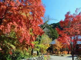 石舟橋周辺の紅葉が見事!晩秋の東京都あきる野市「秋川渓谷」で紅葉散歩|東京都|トラベルjp<たびねす>