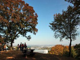 素朴な紅葉が魅力的!「神奈川県立七沢森林公園」は気軽なハイキング感覚で|神奈川県|トラベルjp<たびねす>