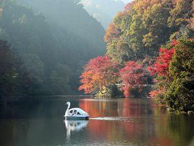 湖面に映る紅葉が美しい!埼玉県毛呂山町「鎌北湖」は隠れた名所|埼玉県|トラベルjp<たびねす>