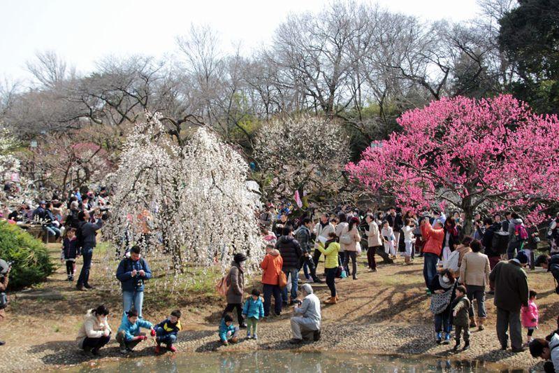 横浜市内有数の名所!港北区「大倉山公園梅林」へ観梅散歩