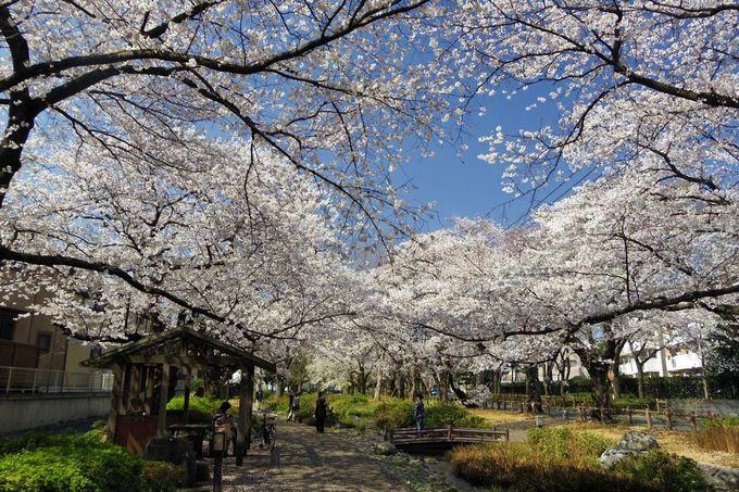 せせらぎの流れる緑道を桜が彩るAゾーンとBゾーン