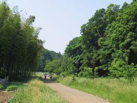 遠足気分で行こう!自然溢れる「神奈川県立茅ヶ崎里山公園」|神奈川県|トラベルjp<たびねす>