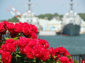 バラと艦船の競演!米軍施設を臨む横須賀市「ヴェルニー公園」|神奈川県|トラベルjp<たびねす>
