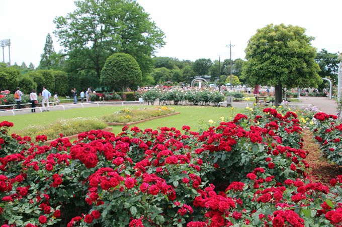 「伊奈町制施行記念公園」は伊奈町の象徴的存在