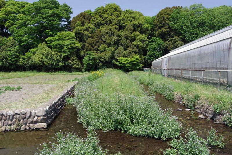 東京都国立市「ママ下湧水」と「矢川おんだし」って何?