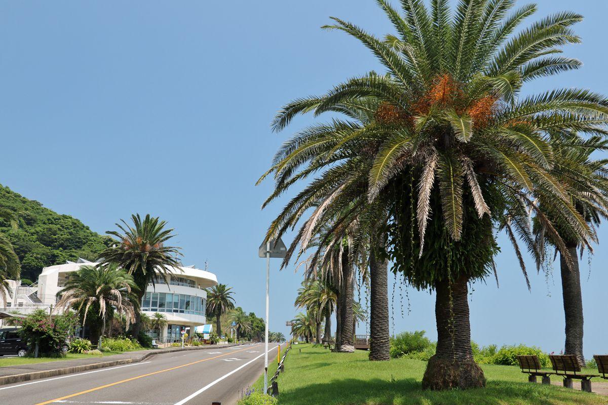 「道の駅フェニックス」の建物も日南海岸の風景に欠かせない