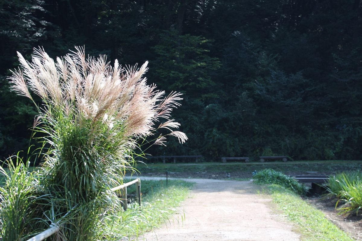 「秋の七草」、覚えていますか?