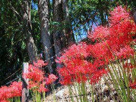 東京都羽村市唯一の水田「根搦前」で初秋の風情を楽しもう!|東京都|トラベルjp<たびねす>