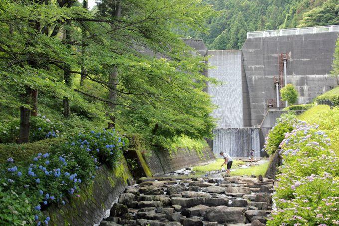紫陽花と渓流のコラボが魅力!埼玉県「雀川砂防ダム公園」