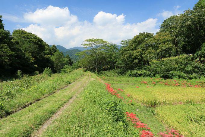 彼岸花の季節に行きたい!神奈川県「四十八瀬川」の里山風景