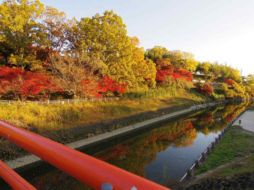 水面に映る紅葉は、まさに「竜田の川の錦」!
