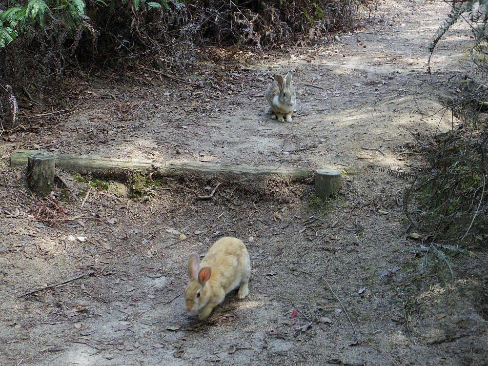 うさぎたちの大歓迎!楽しい島内散歩