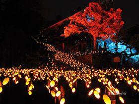 幻想的!2万本の竹燈籠が城下町を美しく彩る・竹田「竹楽」|大分県|トラベルjp<たびねす>