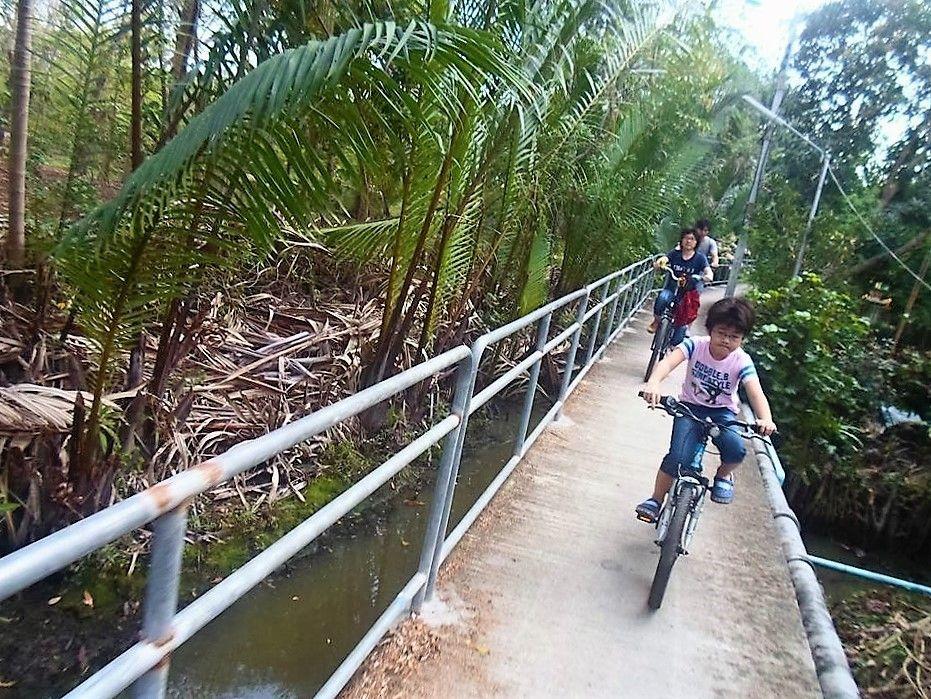 ジャングルのプランテーション地帯を爽快サイクリング