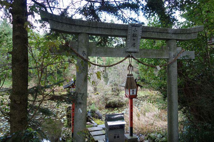 龍王神社神霊池「小松ヶ池」