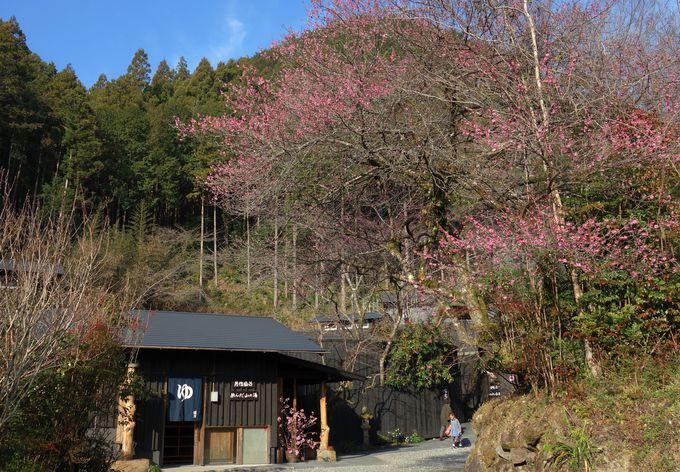 千年の美湯、そうだ桑田山温泉「和」行こう。