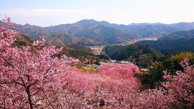 """そうだ桑田山温泉行こう。高知""""雪割り桜の里""""の人気宿「和」"""