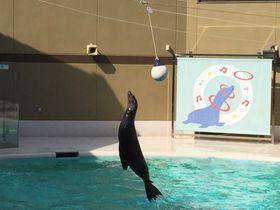 参拝帰りに遊べる!「宮島水族館 みやじマリン」の楽しみ方|広島県|トラベルjp<たびねす>