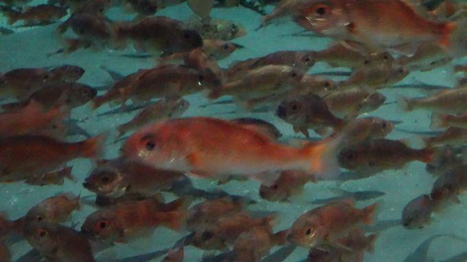 アカムツなど日本海の生きものに会えるコーナー「日本海」