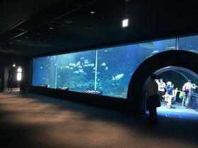 日本海を再現した水槽に注目!新潟市水族館「マリンピア日本海」|新潟県|トラベルjp<たびねす>