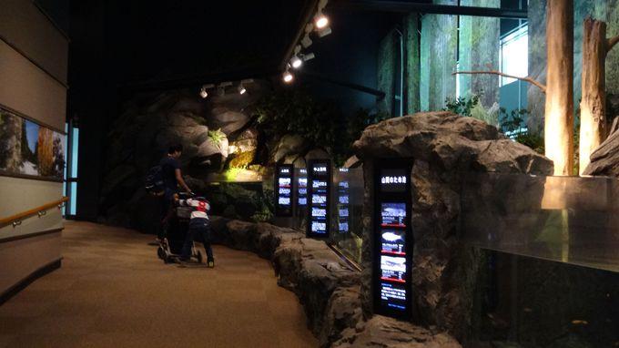 日本最長の河川・信濃川流域で生息する魚も展示