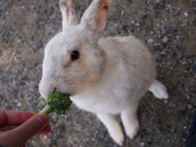うさぎにあげる野菜を事前に準備して満足度UP!