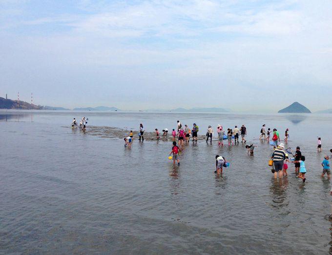生き物がいっぱい!四方を海に囲まれた不思議な空間