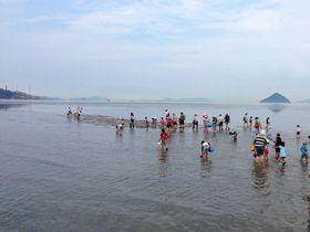 期間限定!3時間だけ出現する「幻の砂浜」で潮干狩り(岡山県倉敷市)