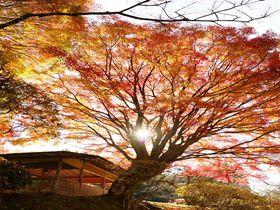 一日100人限定故の極上の日本庭園、京都「白龍園」|京都府|トラベルjp<たびねす>
